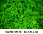 """Ferns Background""  A green background photo of ferns and other green plants in early Summer. - stock photo"