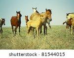 Herd Of Wild Horses In The Ope...