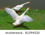 White Geese On Green Field
