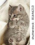 Stock photo funny kitten 81646213
