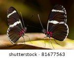 A Mating Pair Butterflies.