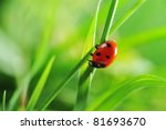 Ladybug Running Along On Blade...