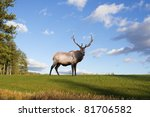 A bull elk on a grassy hillside in Pennsylvania,USA. - stock photo