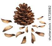 Collection Set  Of Pine Fir...
