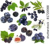 collection set of blue purple... | Shutterstock . vector #81720088