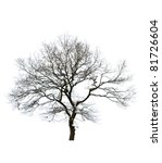 Isolated Bare Tree Against...
