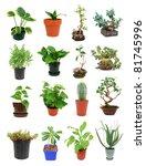 the indoor houseplant trees | Shutterstock . vector #81745996