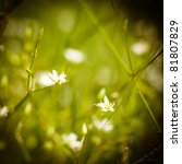 meadow plant background  white... | Shutterstock . vector #81807829