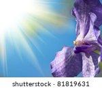 blue orchid | Shutterstock . vector #81819631