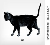 "engraving vintage cat from ""the ... 