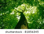 nature. pathway in the forest... | Shutterstock . vector #81856345