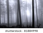 Hazy blue forest at dawn - stock photo