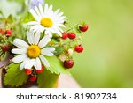 Bouquet From A Camomile And...