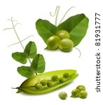 vector green ripe peas with... | Shutterstock .eps vector #81931777