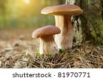 Boletus Mushroom In The Moss