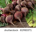 some fresh beetroots with tops | Shutterstock . vector #81983371