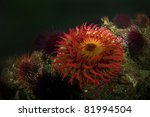 A Sea Anemone Waiting On The...