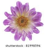 Studio Shot Of  Lilac Colored...
