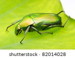 insect shine green flower beetle - stock photo
