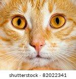 Portrait Of A Cat Close Up