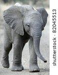 Stock photo baby elephant in road 82045513