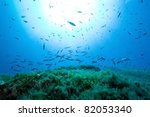 the underwater world | Shutterstock . vector #82053340