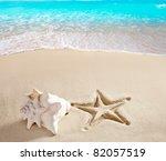 caribbean summer beach shell... | Shutterstock . vector #82057519