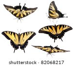 Eastern Tiger Swallowtail ...