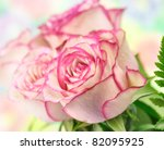 fresh pink roses , close up shot for background - stock photo