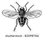 housefly  musca domestica  or... | Shutterstock .eps vector #82098766