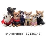 Stock photo cat closed inside pet carrier playing with a chihuahua isolated on white background 82136143