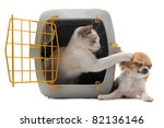 Stock photo cat closed inside pet carrier playing with a chihuahua isolated on white background 82136146
