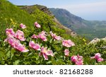 Nice flowers in mountains - stock photo