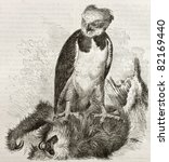 Small photo of Old illustration of Harpy Eagle (Harpia harpyja). Created by Kretschmer, published on Merveilles de la Nature, Bailliere et fils, Paris, 1878