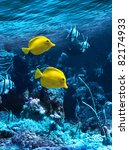 Two Yellow Tropical Fishes In...