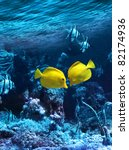 Two Yellow Tropical Fishes Mee...