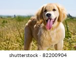 Golden Retriever puppy outside in nature - stock photo