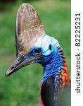 double wattled cassowary profile | Shutterstock . vector #82225231