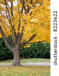 fall tree with golden leaves ... | Shutterstock . vector #8223622