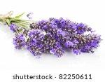 lavender bunch close up... | Shutterstock . vector #82250611