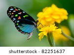 Stock photo colorful butterfly 82251637