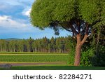willow tree in beautiful summer landscape - stock photo