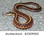 Red Sided Garter Snake ...