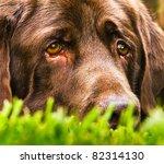 A Very Sad Dog  Looks Like He...