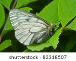 a close up of the butterfly ... | Shutterstock . vector #82318507