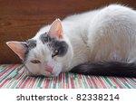 "Close to a domestic cat "" Felis silvestris forma catus"" - stock photo"
