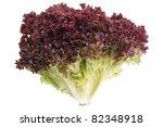 lollo rosso lettuce isolated... | Shutterstock . vector #82348918