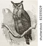 Great Horned Owl Old...