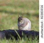tree squirrel that is... | Shutterstock . vector #82383316