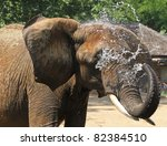 African Elephant Cooling Off B...